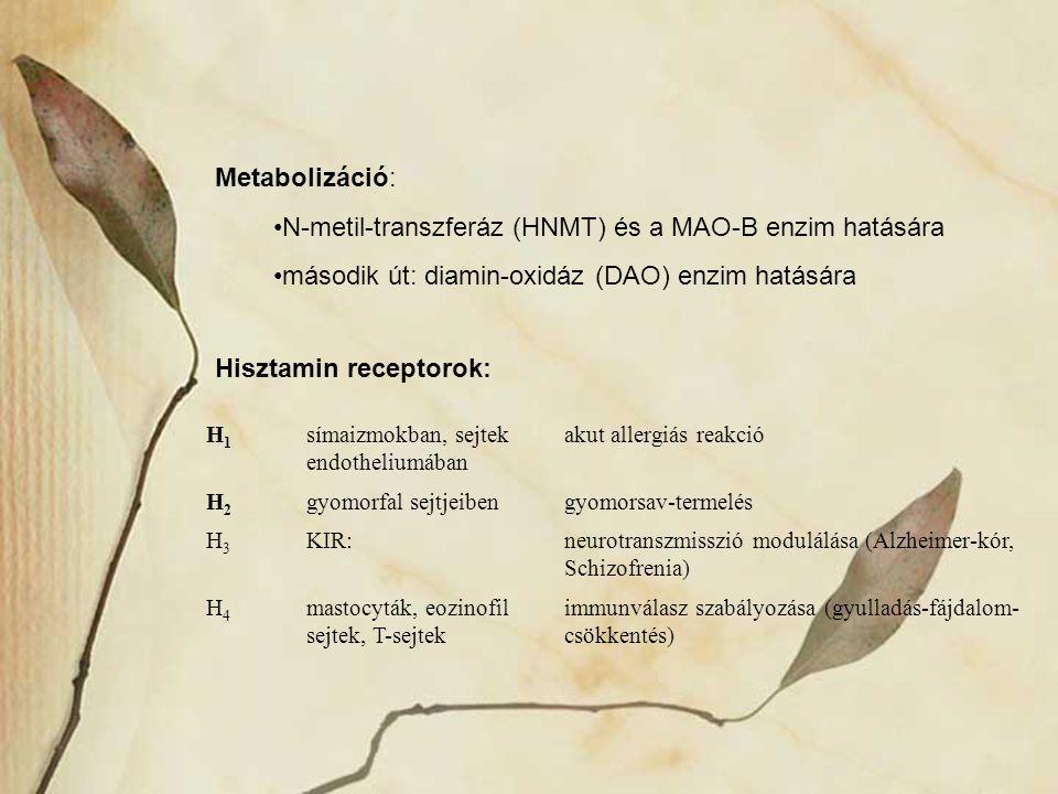 Metabolizáció: N-metil-transzferáz (HNMT) és a MAO-B enzim hatására második út: diamin-oxidáz (DAO) enzim hatására Hisztamin receptorok: H1H1 símaizmo