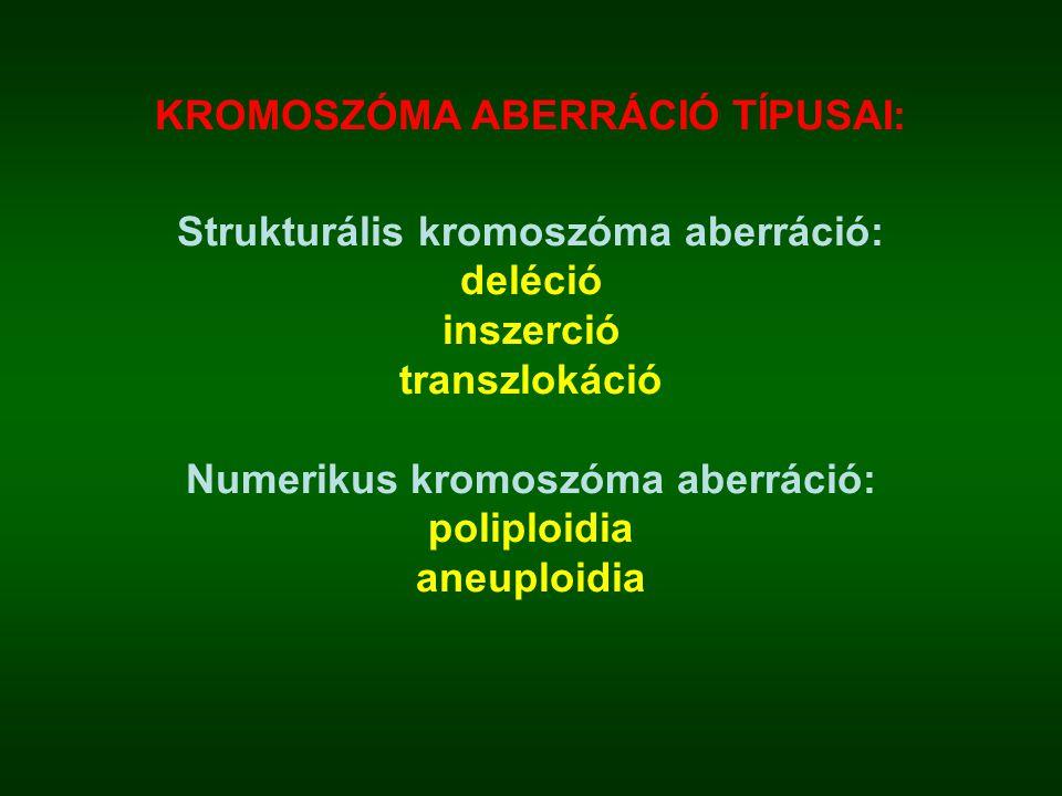 KROMOSZÓMA ABERRÁCIÓ TÍPUSAI: Strukturális kromoszóma aberráció: deléció inszerció transzlokáció Numerikus kromoszóma aberráció: poliploidia aneuploid