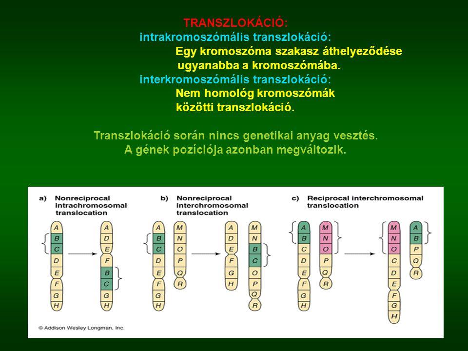 TRANSZLOKÁCIÓ: intrakromoszómális transzlokáció: Egy kromoszóma szakasz áthelyeződése ugyanabba a kromoszómába. interkromoszómális transzlokáció: Nem