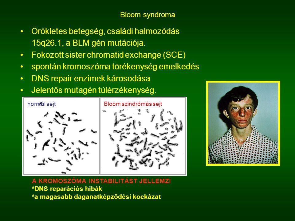 Bloom syndroma Örökletes betegség, családi halmozódás 15q26.1, a BLM gén mutációja. Fokozott sister chromatid exchange (SCE) spontán kromoszóma töréke