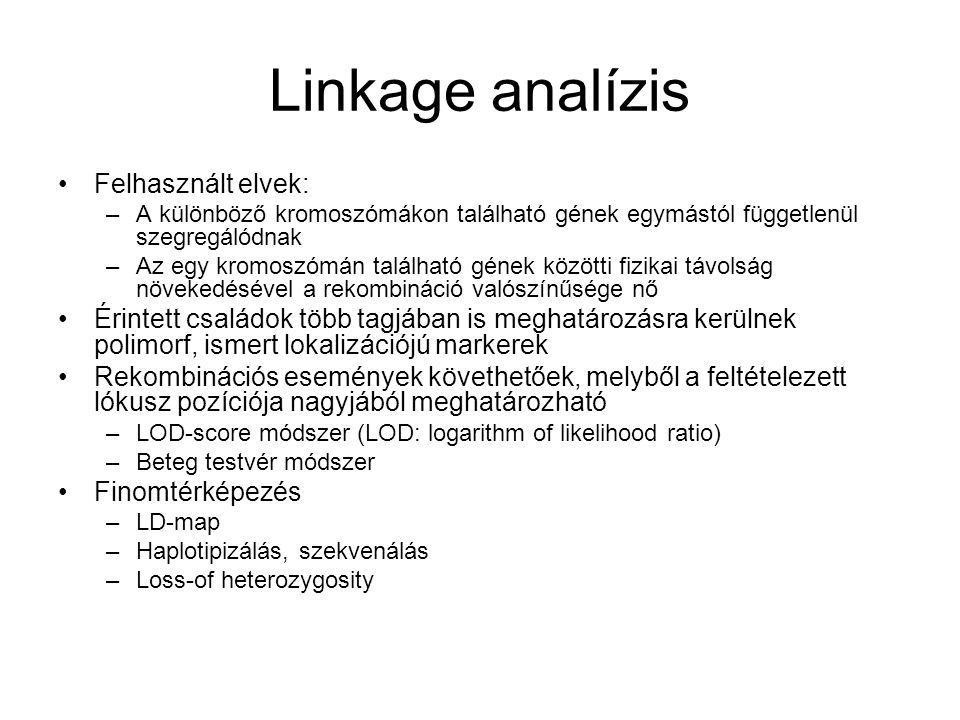 Linkage analízis Felhasznált elvek: –A különböző kromoszómákon található gének egymástól függetlenül szegregálódnak –Az egy kromoszómán található géne
