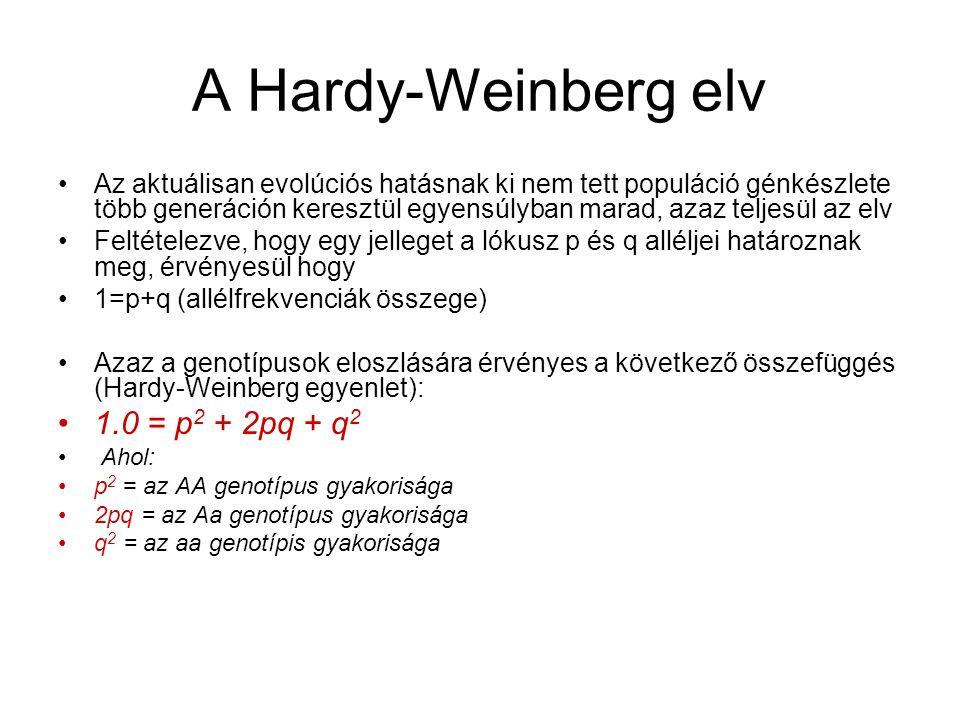 A Hardy-Weinberg elv Az aktuálisan evolúciós hatásnak ki nem tett populáció génkészlete több generáción keresztül egyensúlyban marad, azaz teljesül az