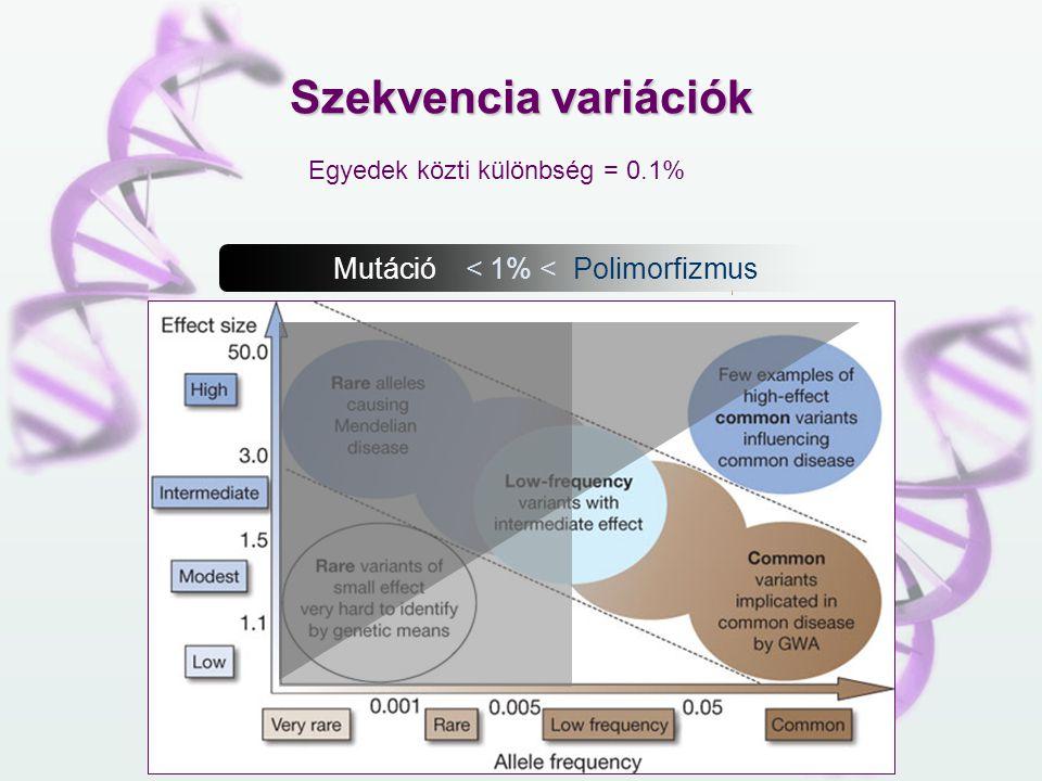 Szekvencia variációk Mutáció < 1% < Polimorfizmus Egyedek közti különbség = 0.1%