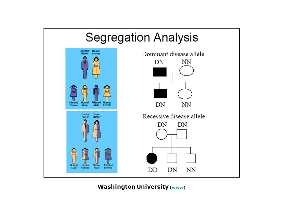 rr 200 white Rr R500 pink RR 300 red genotype frequencies allele frequencies 200/1000 = 0.2 rr 500/1000 = 0.5 Rr 300/1000 = 0.3 RR total = 1000 flowers genotype frequencies: A genetikai meghatározottság elemzése