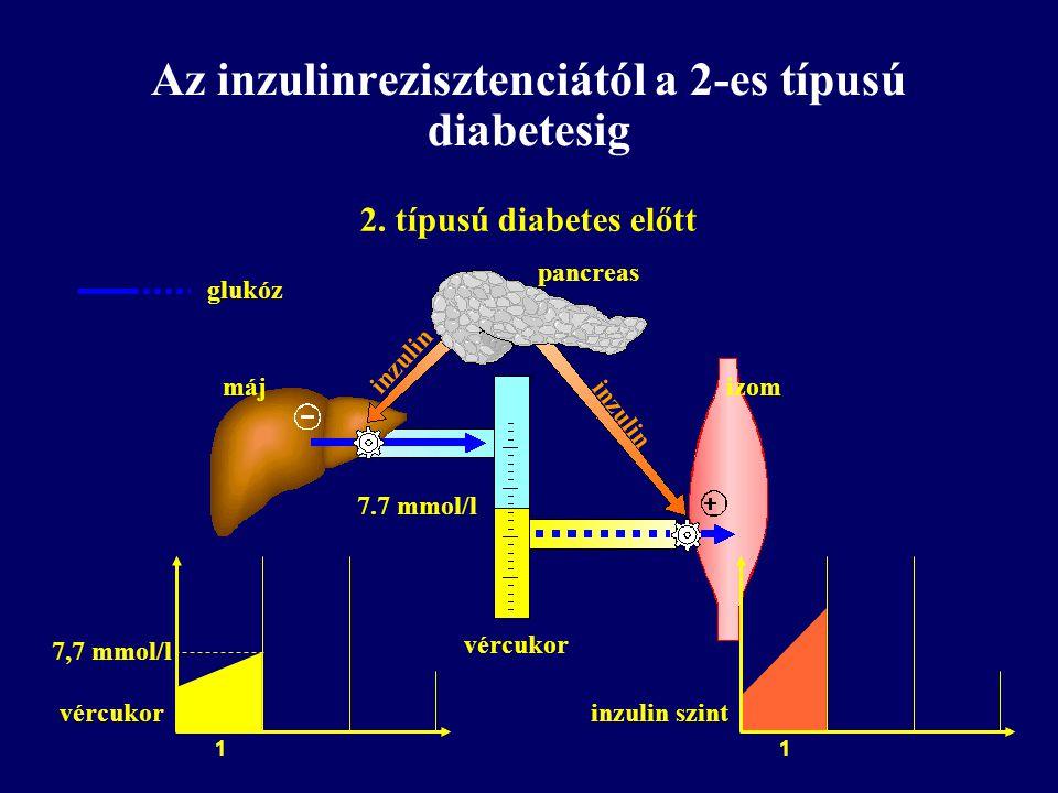 Az inzulinrezisztenciától a 2-es típusú diabetesig 2. típusú diabetes előtt pancreas izommáj vércukor 7.7 mmol/l inzulin glukóz vércukor 7,7 mmol/l 1