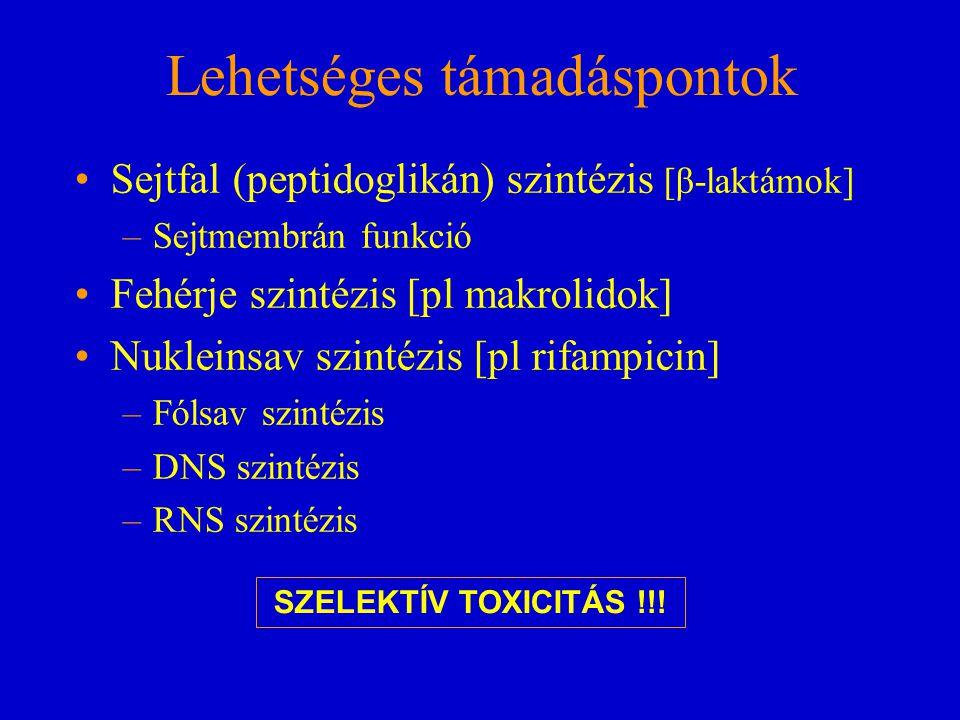 Lehetséges támadáspontok Sejtfal (peptidoglikán) szintézis [β-laktámok] –Sejtmembrán funkció Fehérje szintézis [pl makrolidok] Nukleinsav szintézis [p