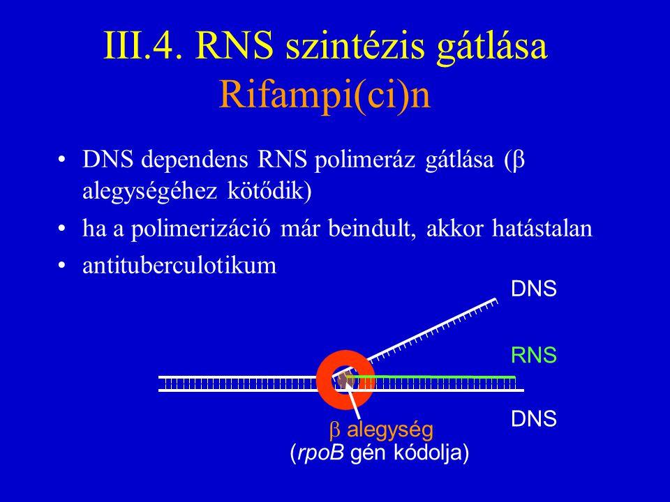 III.4. RNS szintézis gátlása Rifampi(ci)n DNS dependens RNS polimeráz gátlása (β alegységéhez kötődik) ha a polimerizáció már beindult, akkor hatástal