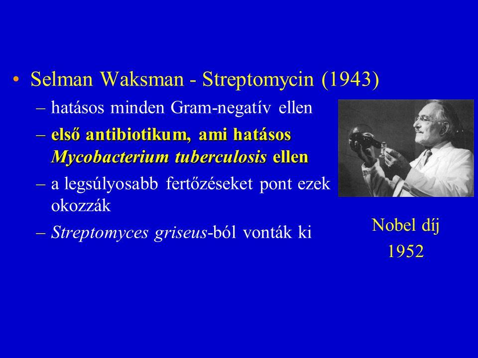 Selman Waksman - Streptomycin (1943) –hatásos minden Gram-negatív ellen –első antibiotikum, ami hatásos Mycobacterium tuberculosis ellen –a legsúlyosa