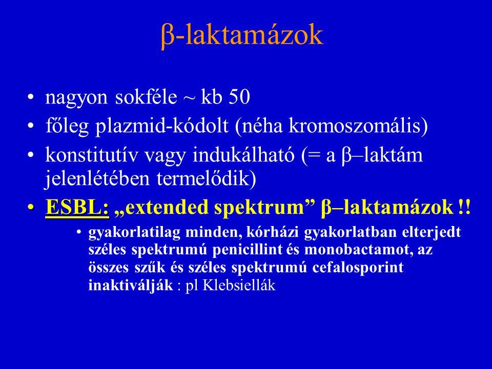 β-laktamázok nagyon sokféle ~ kb 50 főleg plazmid-kódolt (néha kromoszomális) konstitutív vagy indukálható (= a β–laktám jelenlétében termelődik) ESBL