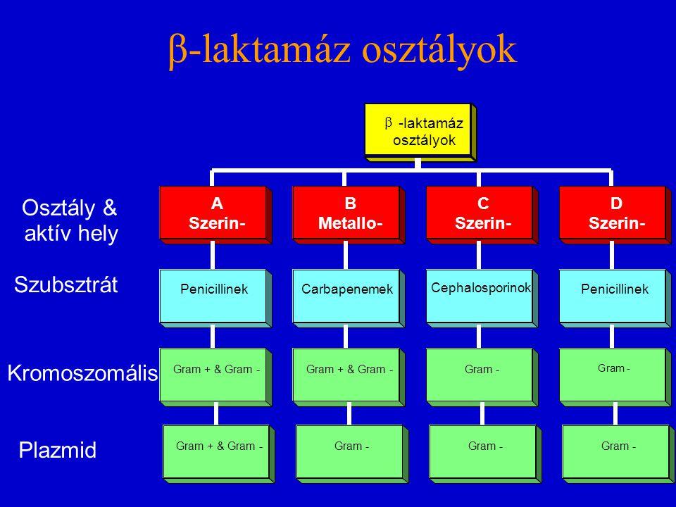 β-laktamáz osztályok