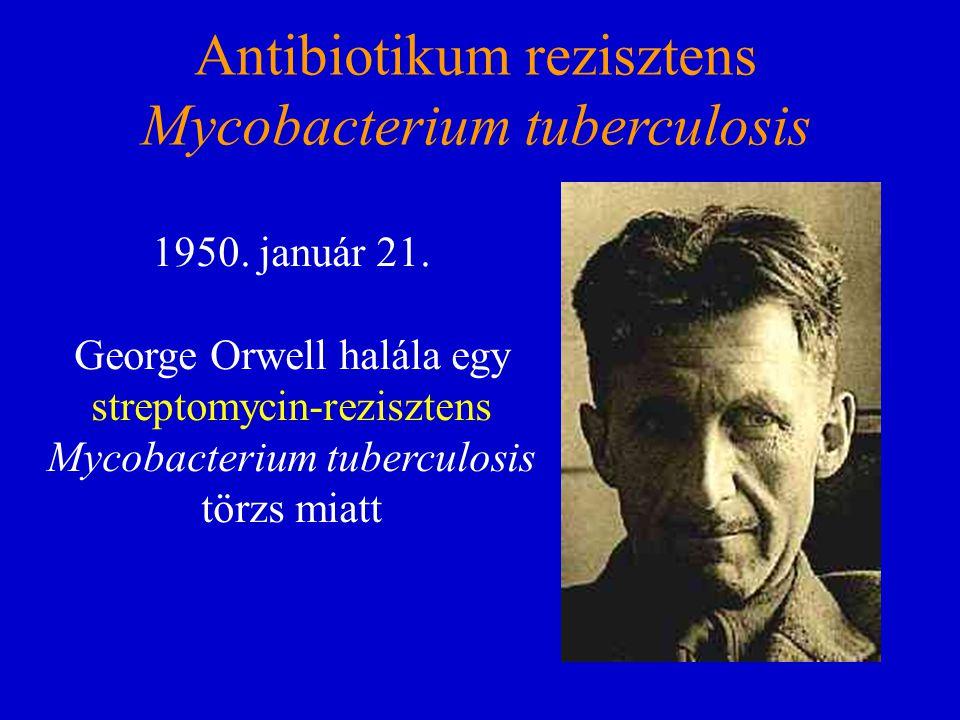Antibiotikum rezisztens Mycobacterium tuberculosis 1950. január 21. George Orwell halála egy streptomycin-rezisztens Mycobacterium tuberculosis törzs