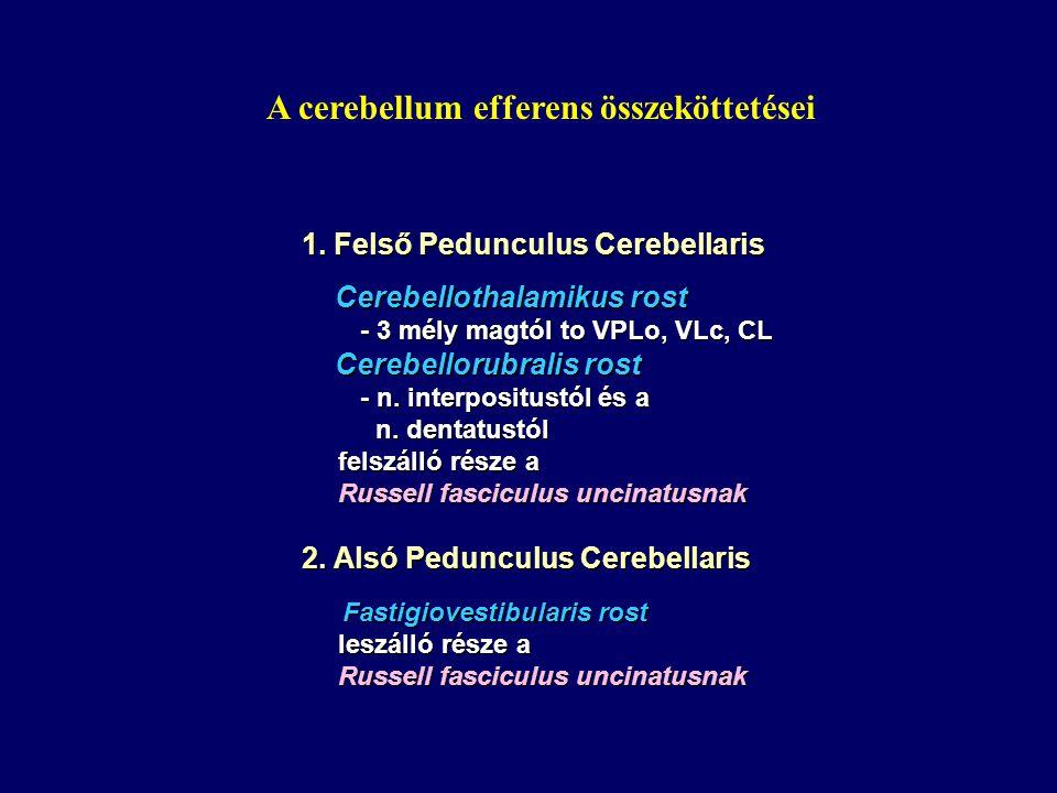 1. Felső Pedunculus Cerebellaris Cerebellothalamikus rost Cerebellothalamikus rost - 3 mély magtól to VPLo, VLc, CL - 3 mély magtól to VPLo, VLc, CL C