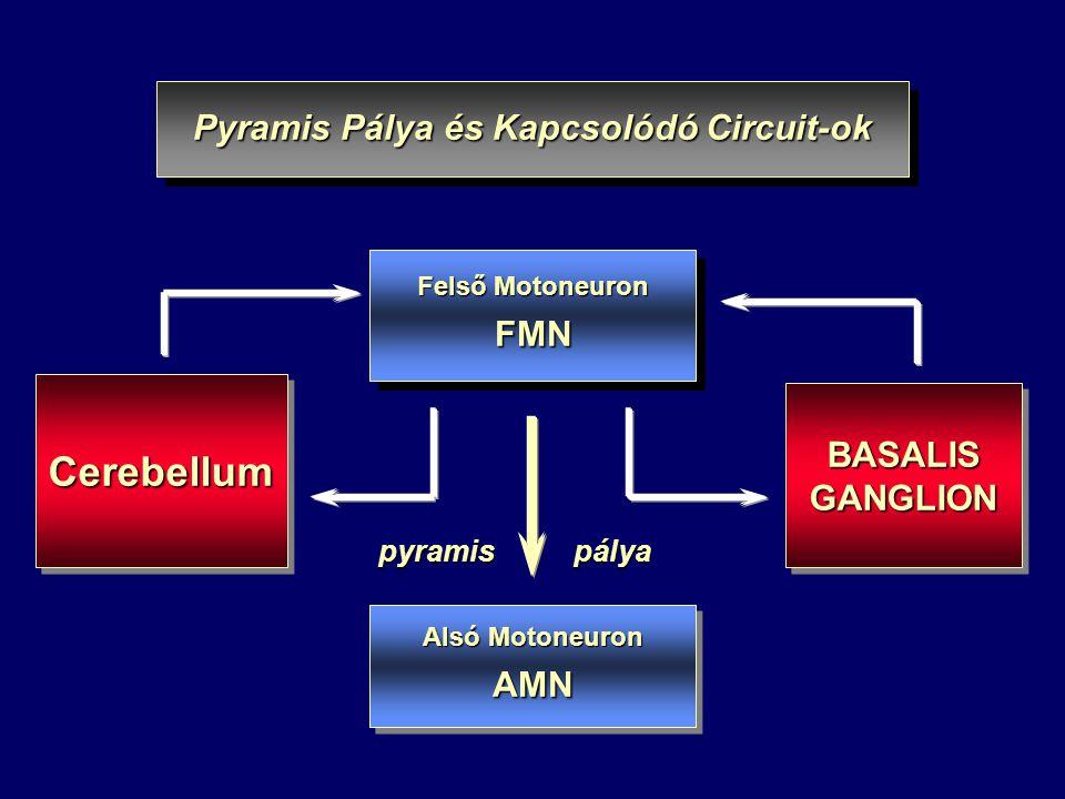 Felső Motoneuron FMN FMN BASALIS GANGLION BASALIS GANGLION Pyramis Pálya és Kapcsolódó Circuit-ok Alsó Motoneuron AMN AMN pyramis pálya CerebellumCerebellum