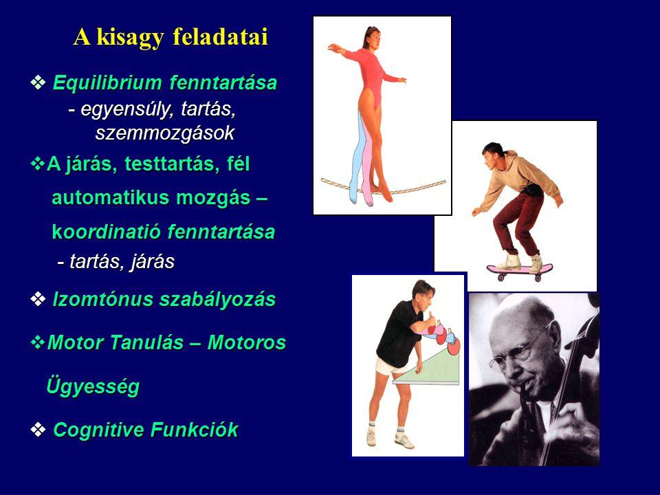  Equilibrium fenntartása - egyensúly, tartás, szemmozgások - egyensúly, tartás, szemmozgások  A járás, testtartás, fél automatikus mozgás – automatikus mozgás – koordinatió fenntartása koordinatió fenntartása - tartás, járás - tartás, járás  Izomtónus szabályozás  Motor Tanulás – Motoros Ügyesség Ügyesség  Cognitive Funkciók A kisagy feladatai