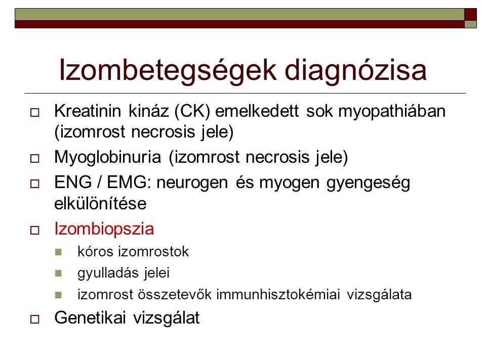 Izombetegségek diagnózisa  Kreatinin kináz (CK) emelkedett sok myopathiában (izomrost necrosis jele)  Myoglobinuria (izomrost necrosis jele)  ENG /