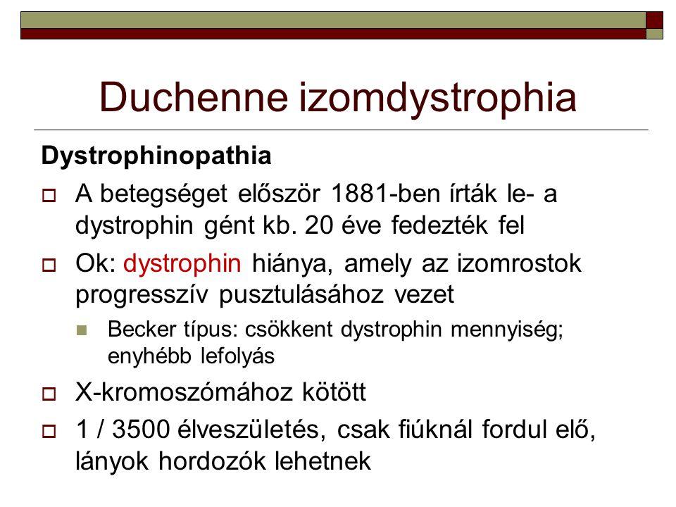 Duchenne izomdystrophia Dystrophinopathia  A betegséget először 1881-ben írták le- a dystrophin gént kb. 20 éve fedezték fel  Ok: dystrophin hiánya,