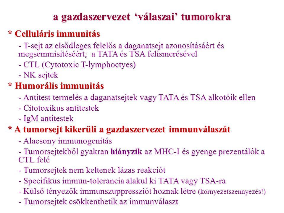 a gazdaszervezet 'válaszai' tumorokra * Celluláris immunitás - T-sejt az elsődleges felelős a daganatsejt azonosításáért és megsemmisítéséért; a TATA és TSA felismerésével - CTL (Cytotoxic T-lymphoctyes) - NK sejtek * Humorális immunitás - Antitest termelés a daganatsejtek vagy TATA és TSA alkotóik ellen - Citotoxikus antitestek - IgM antitestek * A tumorsejt kikerüli a gazdaszervezet immunválaszát - Alacsony immunogenitás - Tumorsejtekből gyakran hiányzik az MHC-I és gyenge prezentálók a CTL felé - Tumorsejtek nem keltenek lázas reakciót - Specifikus immun-tolerancia alakul ki TATA vagy TSA-ra - Külső tényezők immunszuppressziót hoznak létre (környezetszennyezés!) - Tumorsejtek csökkenthetik az immunválaszt