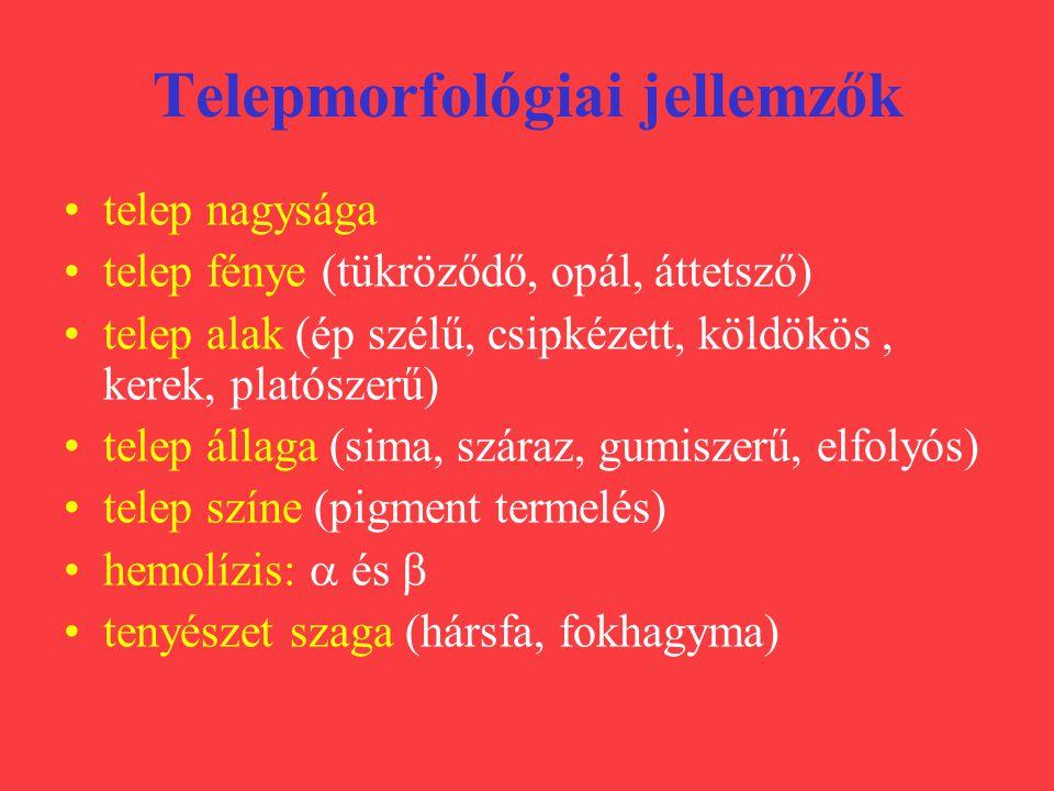 Telepmorfológiai jellemzők telep nagysága telep fénye (tükröződő, opál, áttetsző) telep alak (ép szélű, csipkézett, köldökös, kerek, platószerű) telep