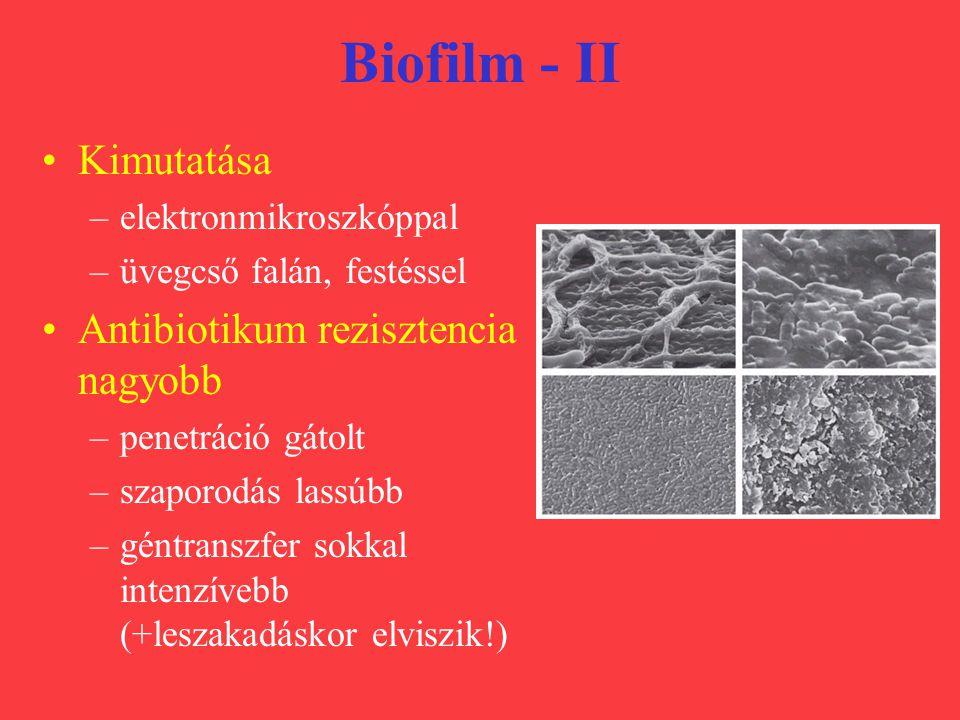 Biofilm - II Kimutatása –elektronmikroszkóppal –üvegcső falán, festéssel Antibiotikum rezisztencia nagyobb –penetráció gátolt –szaporodás lassúbb –gén
