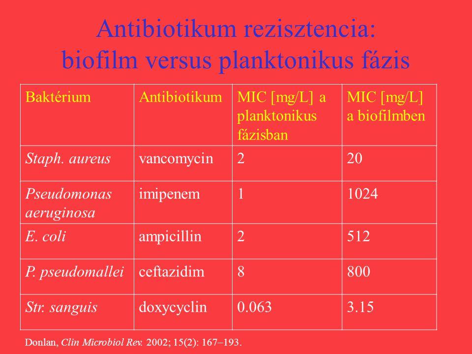 Antibiotikum rezisztencia: biofilm versus planktonikus fázis BaktériumAntibiotikumMIC [mg/L] a planktonikus fázisban MIC [mg/L] a biofilmben Staph. au