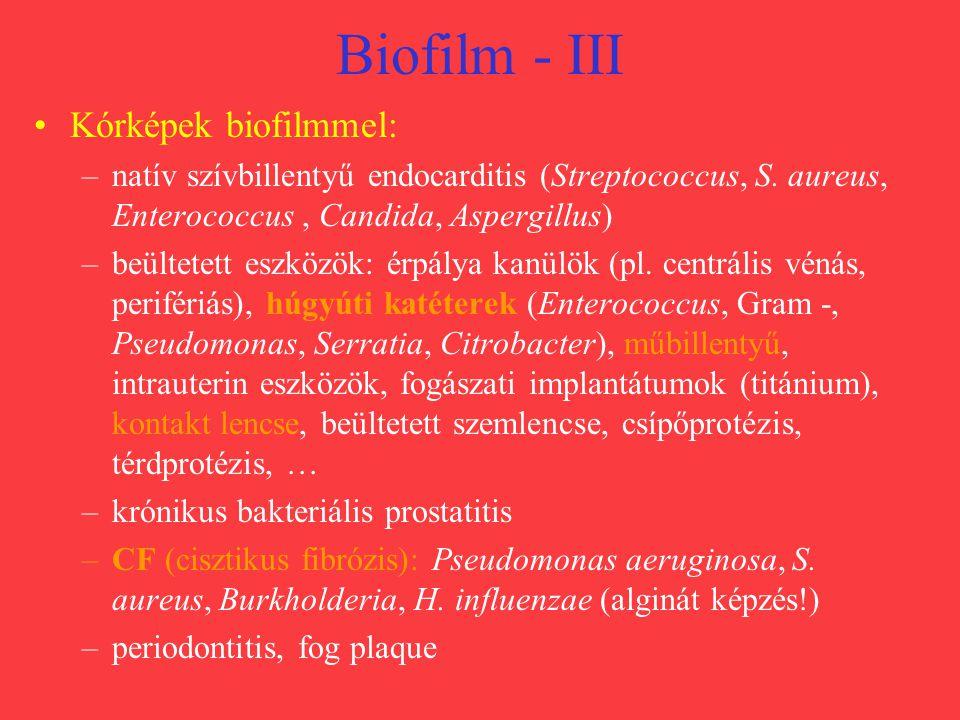 Biofilm - III Kórképek biofilmmel: –natív szívbillentyű endocarditis (Streptococcus, S. aureus, Enterococcus, Candida, Aspergillus) –beültetett eszköz