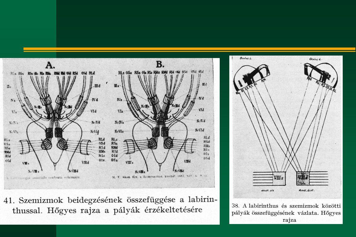 Hőgyes Endre életének kronológiája n 1901- készül az új Rákos-utcai Pasteur- kórház n 1904 jan.