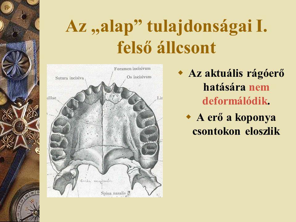 """Az """"alap tulajdonságai I.felső állcsont  Az aktuális rágóerő hatására nem deformálódik."""
