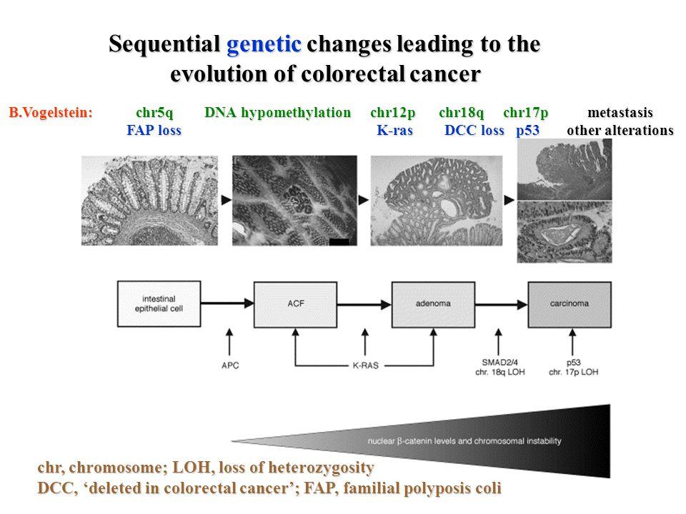 a daganatsejt és belső-külső környezetének viszonya genetikai változások környezeti hatások a sejt válaszai hatások a környezetre