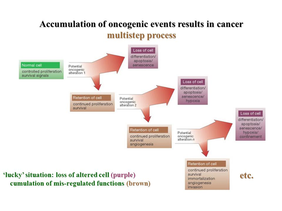 Accumulation of oncogenic events results in cancer multistep process 'lucky' situation: loss of altered cell (purple) cumulation of mis-regulated functions (brown) cumulation of mis-regulated functions (brown) etc.