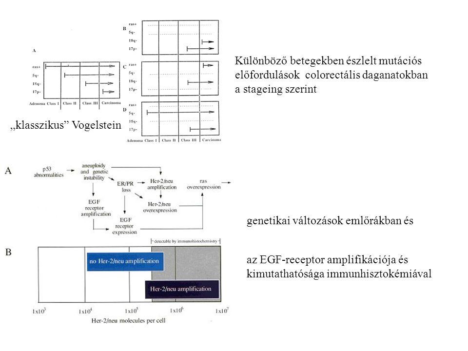 """Különböző betegekben észlelt mutációs előfordulások colorectális daganatokban a stageing szerint """"klasszikus"""" Vogelstein az EGF-receptor amplifikációj"""