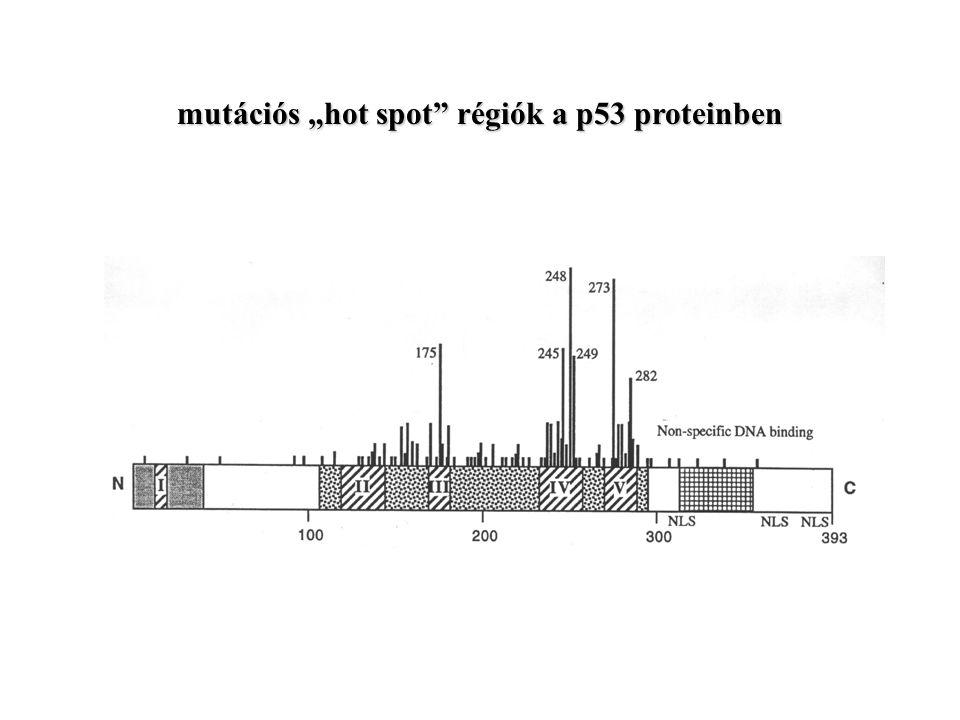 """mutációs """"hot spot régiók a p53 proteinben"""