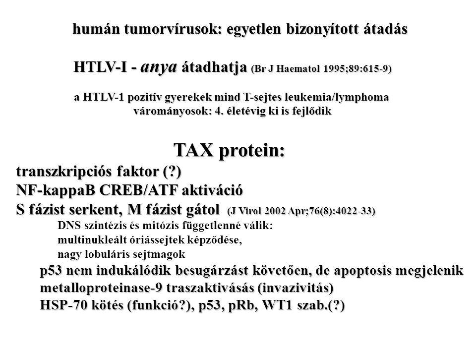 HTLV-I - anya átadhatja (Br J Haematol 1995;89:615-9) a HTLV-1 pozitív gyerekek mind T-sejtes leukemia/lymphoma várományosok: 4.