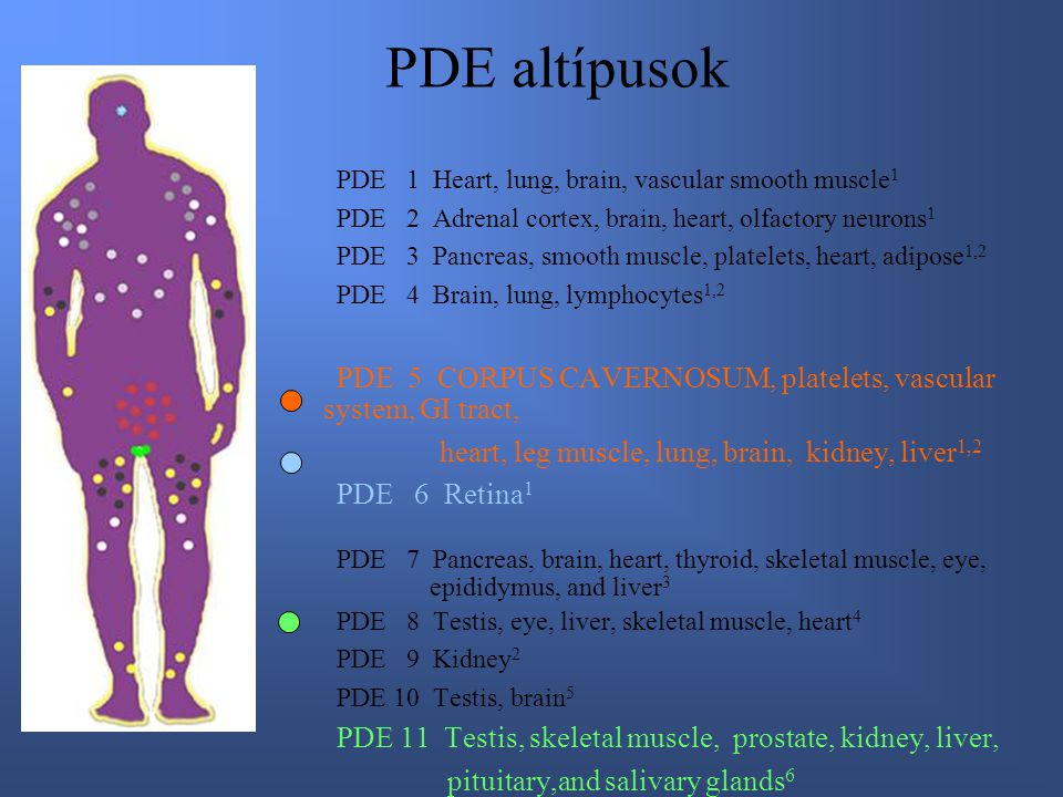 PDE altípusok PDE 1 Heart, lung, brain, vascular smooth muscle 1 PDE 2 Adrenal cortex, brain, heart, olfactory neurons 1 PDE 3 Pancreas, smooth muscle