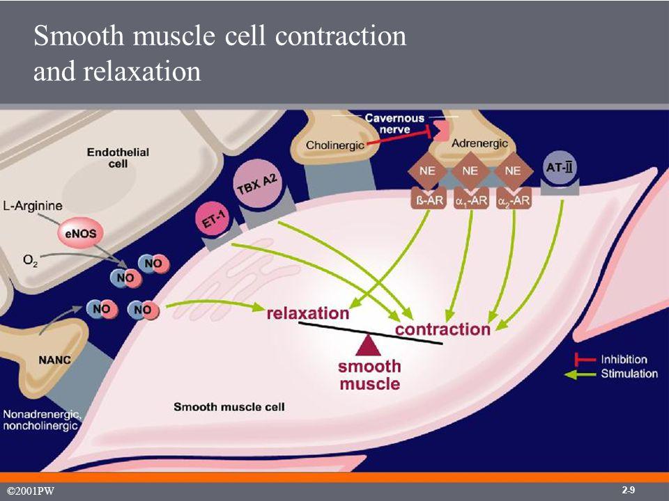 2-11 NANC Nonadrenergic, noncholinergic NO/cGMP mechanism of penile erection