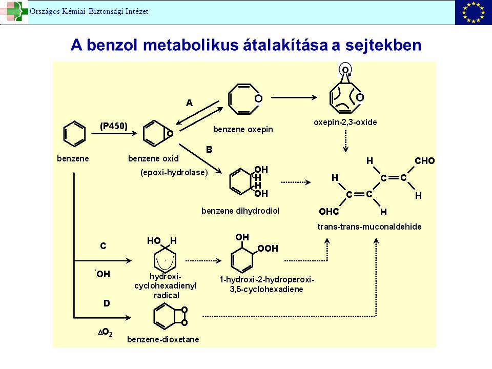 A benzol metabolikus átalakítása a sejtekben Országos Kémiai Biztonsági Intézet