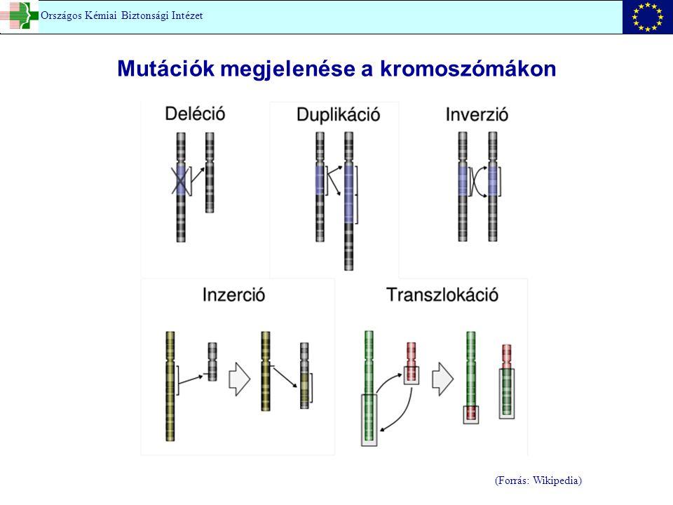 (Forrás: Wikipedia) Országos Kémiai Biztonsági Intézet Mutációk megjelenése a kromoszómákon