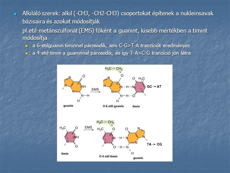 Alkiláló szerek: alkil (-CH3, -CH2-CH3) csoportokat építenek a nukleinsavak Alkiláló szerek: alkil (-CH3, -CH2-CH3) csoportokat építenek a nukleinsava