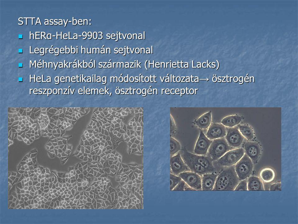 STTA assay-ben: hERα-HeLa-9903 sejtvonal hERα-HeLa-9903 sejtvonal Legrégebbi humán sejtvonal Legrégebbi humán sejtvonal Méhnyakrákból származik (Henrietta Lacks) Méhnyakrákból származik (Henrietta Lacks) HeLa genetikailag módosított változata → ösztrogén reszponzív elemek, ösztrogén receptor HeLa genetikailag módosított változata → ösztrogén reszponzív elemek, ösztrogén receptor