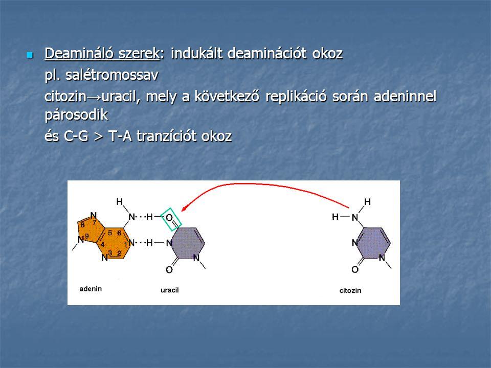 Deamináló szerek: indukált deaminációt okoz Deamináló szerek: indukált deaminációt okoz pl.