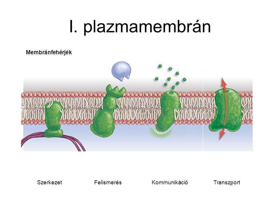 I. plazmamembrán TranszportKommunikációFelismerésSzerkezet Membránfehérjék