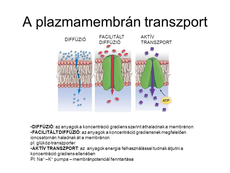 A plazmamembrán transzport DIFFÚZIÓ AKTÍV TRANSZPORT FACILITÁLT DIFFÚZIÓ DIFFÚZIÓ: az anyagok a koncentráció gradiens szerint áthaladnak a membránon F