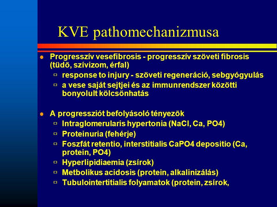 KVE pathomechanizmusa l Progresszív vesefibrosis - progresszív szöveti fibrosis (tüdõ, szívizom, érfal)  response to injury - szöveti regeneráció, se