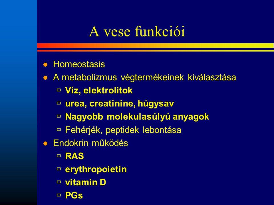 A vese funkciói l Homeostasis l A metabolizmus végtermékeinek kiválasztása  Víz, elektrolitok  urea, creatinine, húgysav  Nagyobb molekulasúlyú any