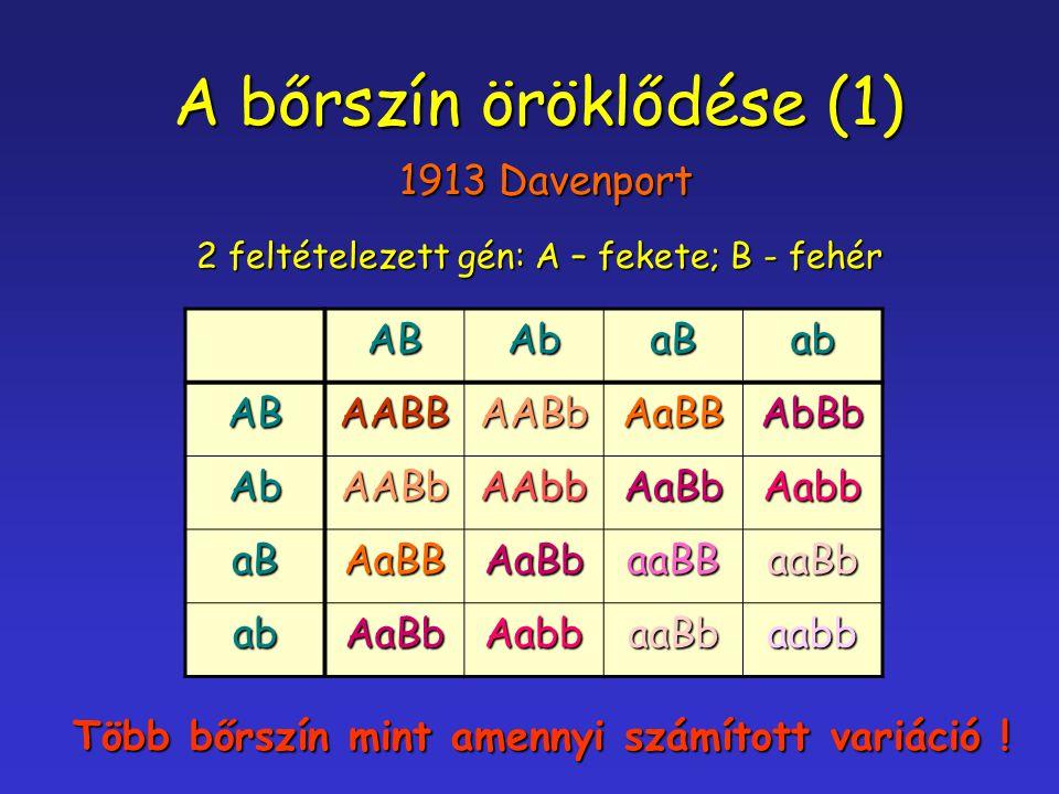 A bőrszín öröklődése (1) 1913 Davenport ABAbaBab ABAABBAABbAaBBAbBb AbAABbAAbbAaBbAabb aBAaBBAaBbaaBBaaBb abAaBbAabbaaBbaabb 2 feltételezett gén: A –