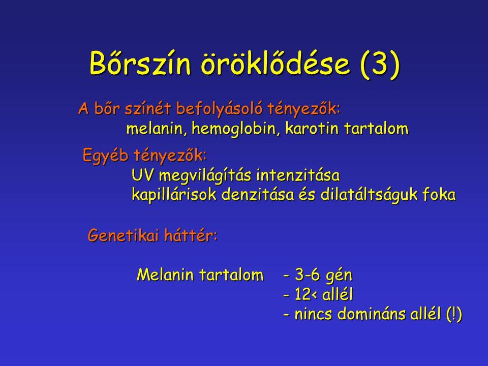 Bőrszín öröklődése (3) A bőr színét befolyásoló tényezők: melanin, hemoglobin, karotin tartalom Egyéb tényezők: UV megvilágítás intenzitása kapilláris