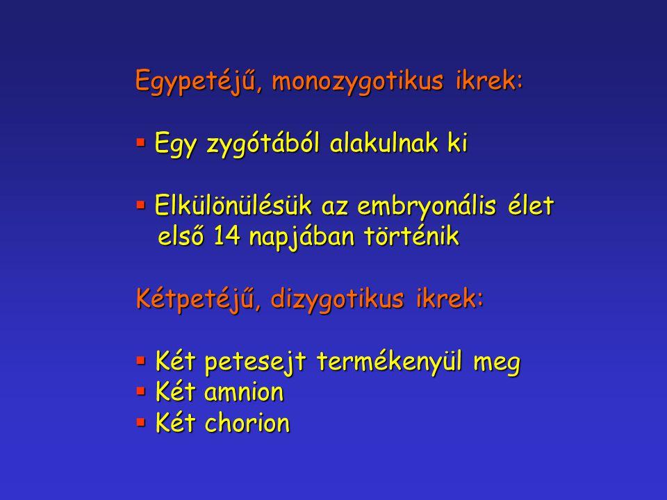 Egypetéjű, monozygotikus ikrek:  Egy zygótából alakulnak ki  Elkülönülésük az embryonális élet első 14 napjában történik első 14 napjában történik K