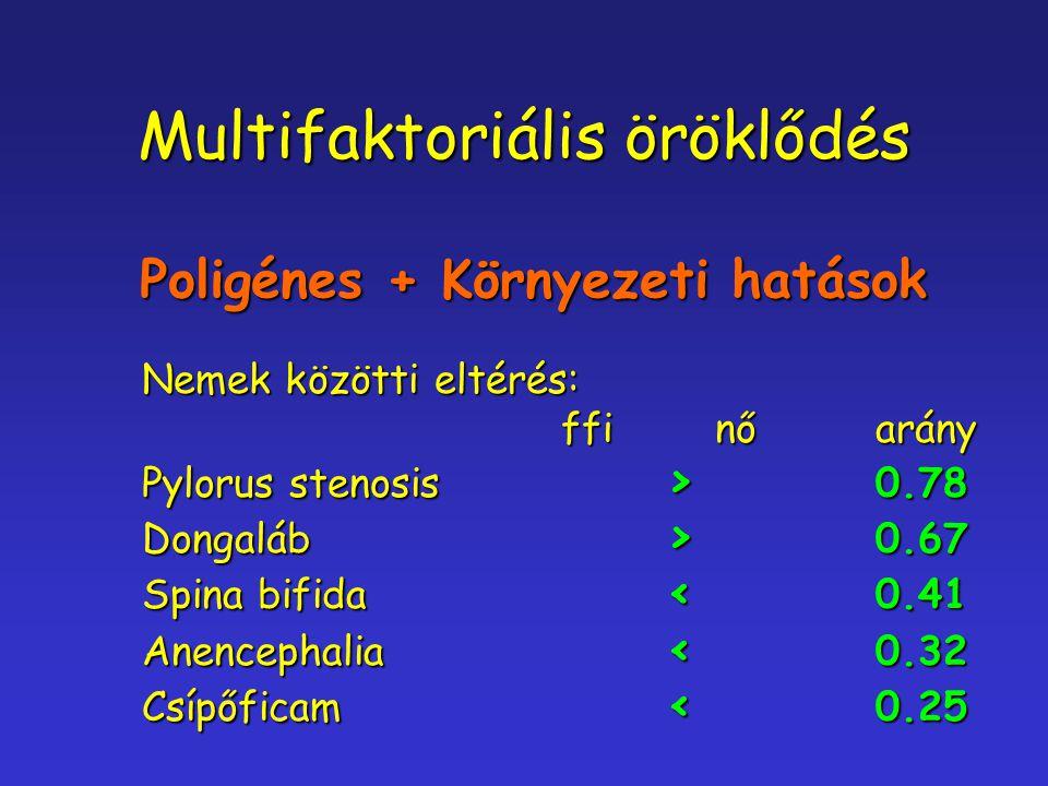 Multifaktoriális öröklődés Poligénes + Környezeti hatások Nemek közötti eltérés: ffi nőarány Pylorus stenosis > 0.78 Dongaláb > 0.67 Spina bifida < 0.
