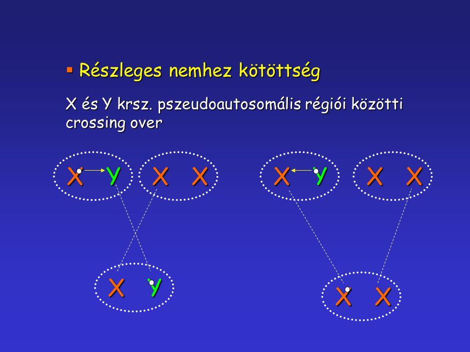  Részleges nemhez kötöttség X és Y krsz. pszeudoautosomális régiói közötti crossing over XX XY XYXYXX XX