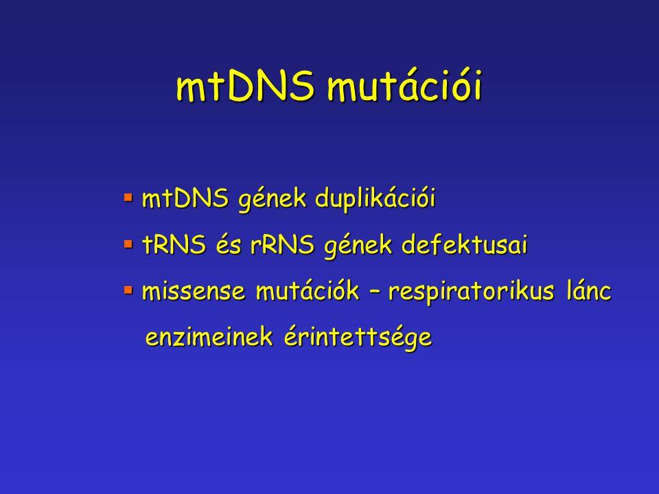 mtDNS mutációi  mtDNS gének duplikációi  tRNS és rRNS gének defektusai  missense mutációk – respiratorikus lánc enzimeinek érintettsége enzimeinek
