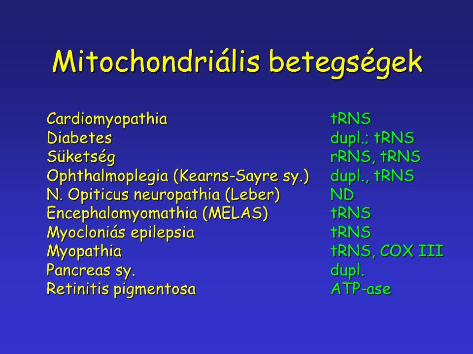 Mitochondriális betegségek CardiomyopathiatRNS Diabetesdupl.; tRNS SüketségrRNS, tRNS Ophthalmoplegia (Kearns-Sayre sy.)dupl., tRNS N. Opiticus neurop
